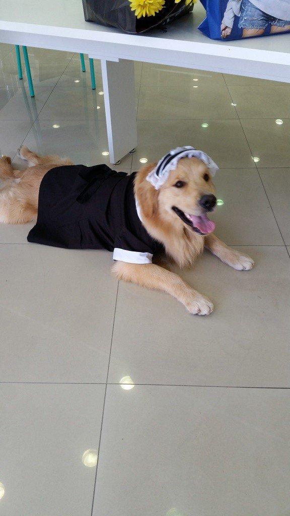 Cachorro-576x1024
