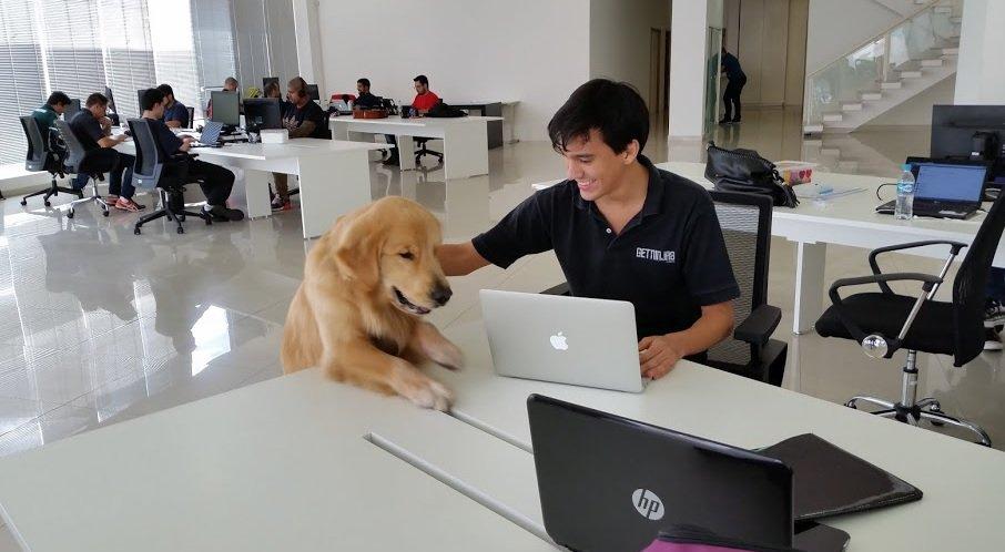 A presença de animais torna o ambiente mais agradável e faz com que o trabalho flua melhor