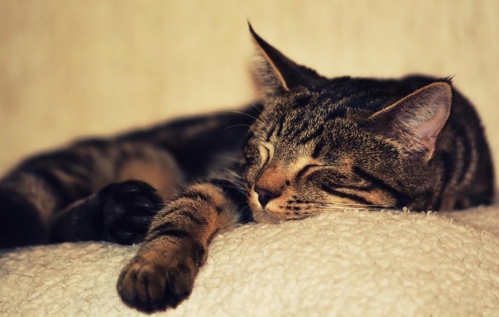 kitten-2874486_1280