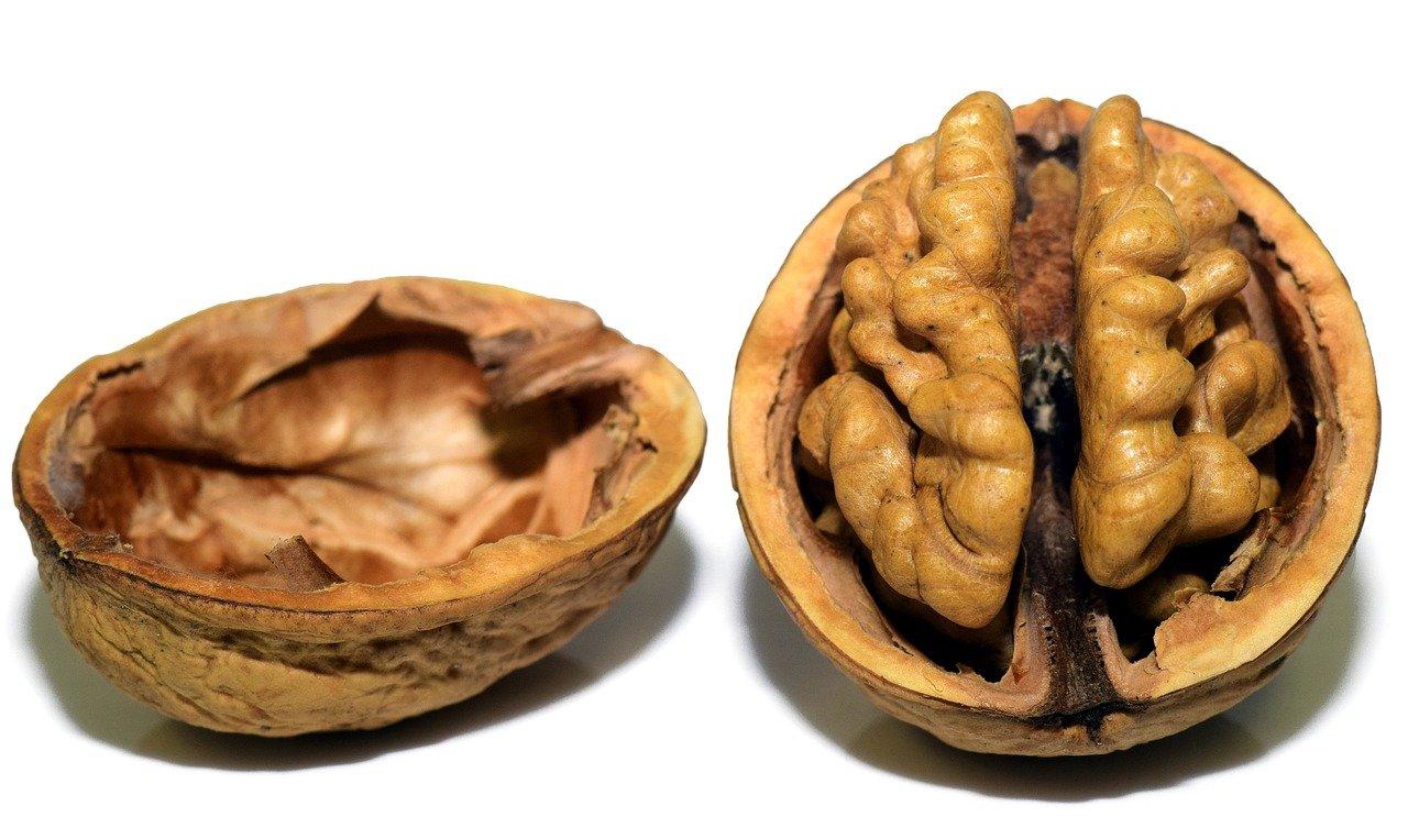 walnut-3072681_1280